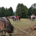 Holzrücken mit einem Pferd durch Manuel von der Kochertaler Fuhrhalterei
