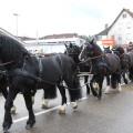 Pferdemarktsumzug Kutsche