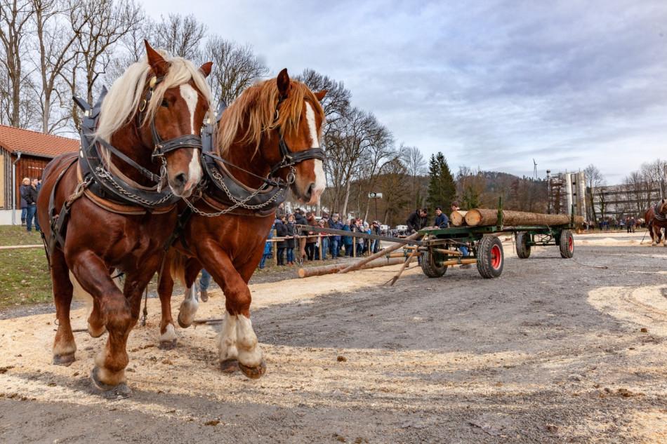 Pferde auf der Kocherwiese