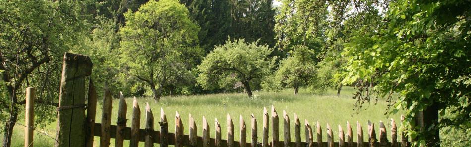 Blick über ein hölzernes Tor auf eine Streuobstwiese am Kirgel