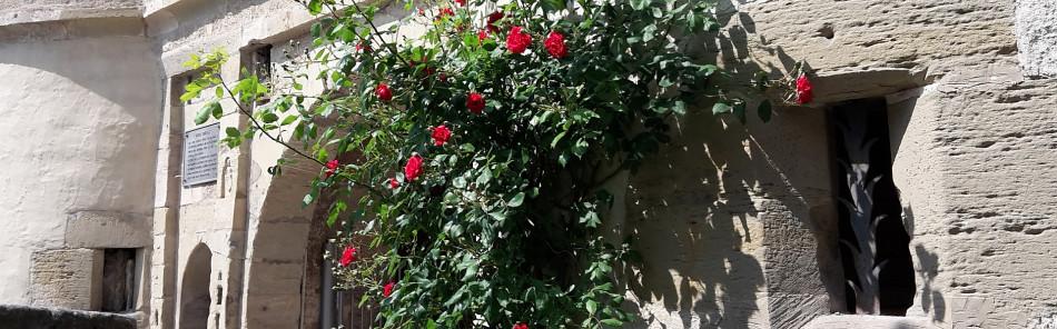 blühender Rosenstrauch am Eingangstor zum Alten Schloss